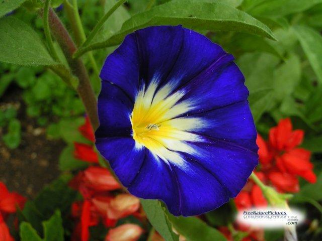 Amazing flowers | ireckonthat