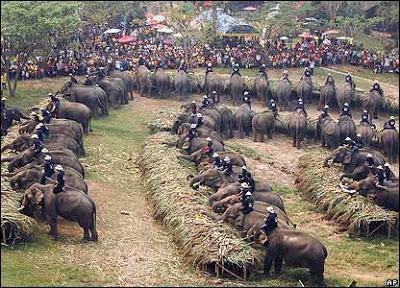 _42674829_elephants_416